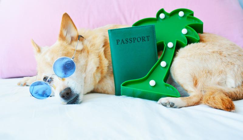 Passaporto Europeo Cane - Documenti cane per viaggiare - TRAVELLING DOG
