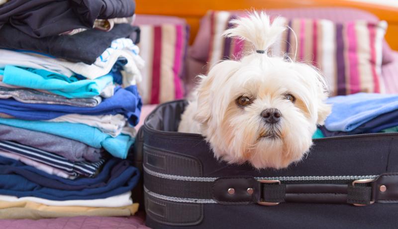 La valigia del cane - checklist da stampare con tutto quello che gli devi portare in vacanza - TRAVELLING DOG