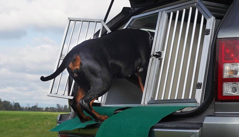 Ecco come abituare il cane al kennel in poche semplici mosse - TRAVELLING DOG